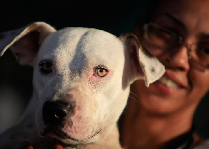 Close up of a white dog with its owner in the background