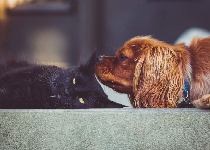 Dog sniffing Cat