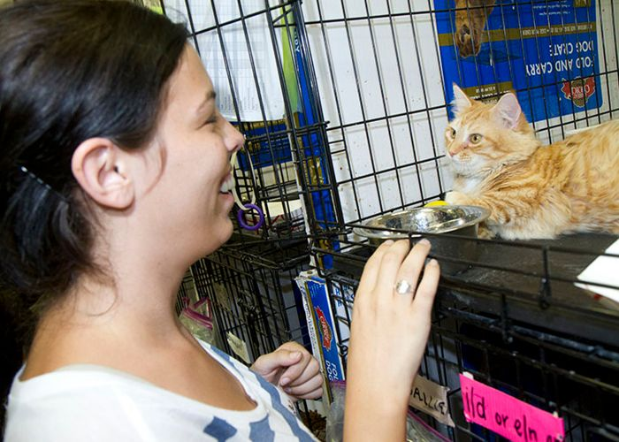 a woman meeting a cat in a shelter