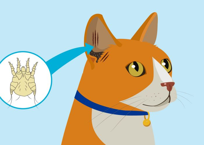 illustration of a cat with a close up image of an ear mite