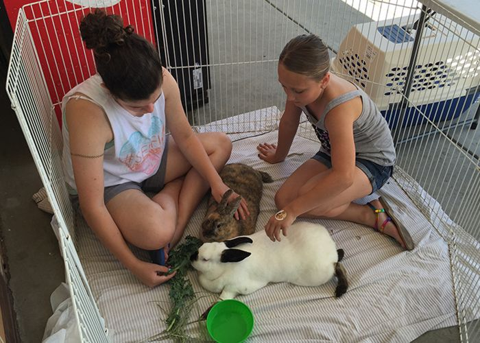 two girls sit inside an enclosure with two rabbits