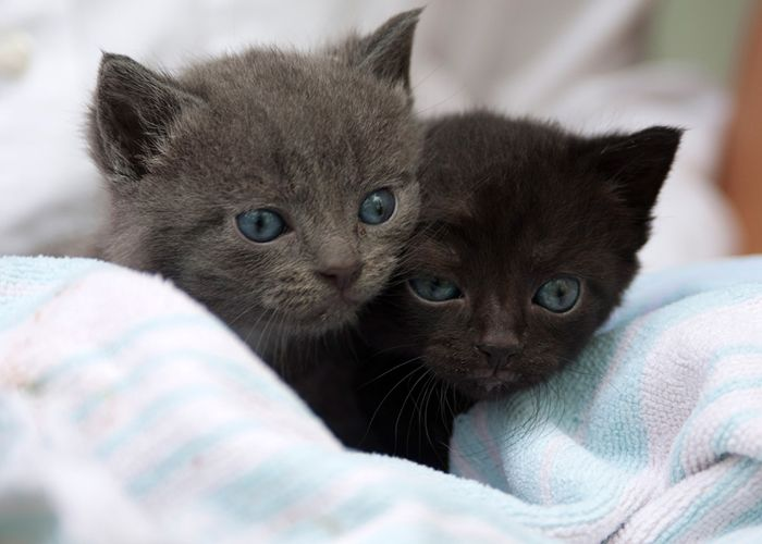 two very young kittens atop a blanket