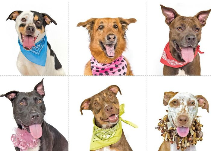 a group of six mixed breed dogs wearing colorful collars and bandanas