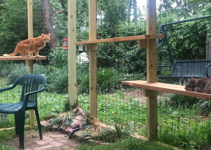 Three cats relaxing in a spacious catio