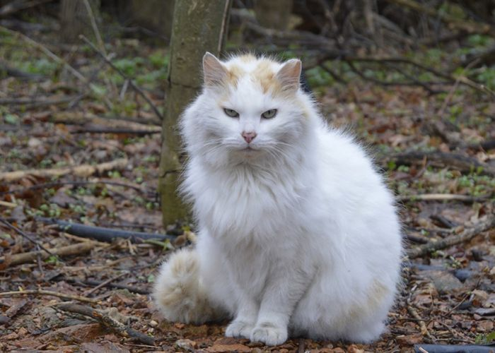 a large white cat in the woods