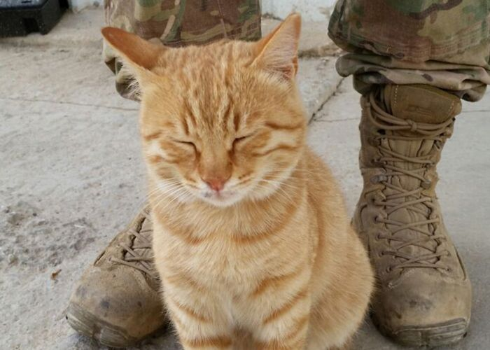 a cat standing in front of a soldier's boots