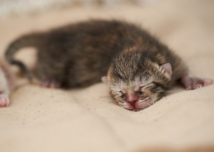 a newborn kitten sleeping on a blanket