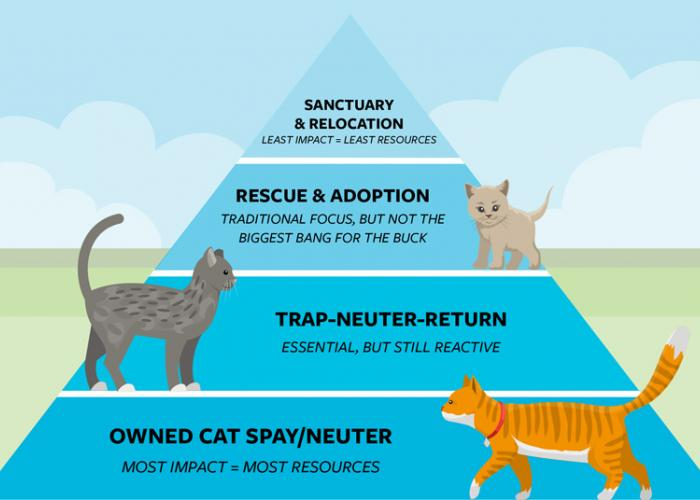 Graphic of a community cat management pyramid