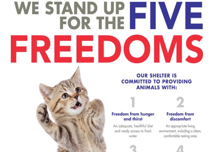 We stand up for the five freedoms