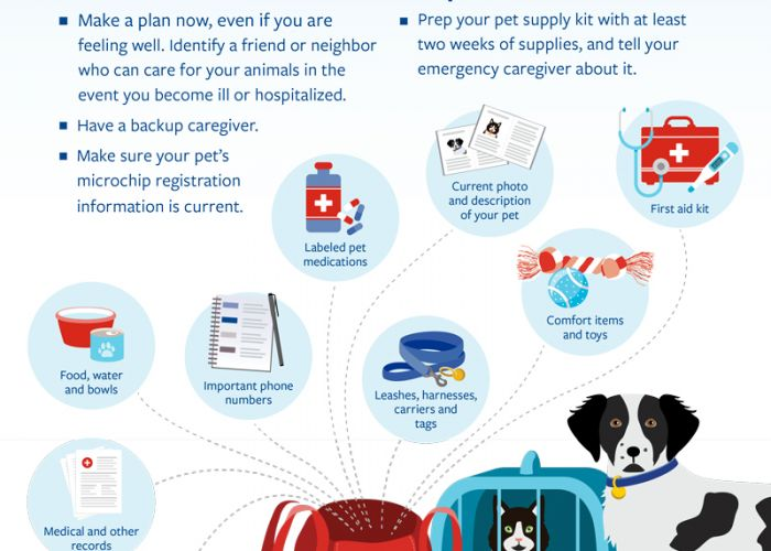 COVID-19 preparedness: A plan for pets