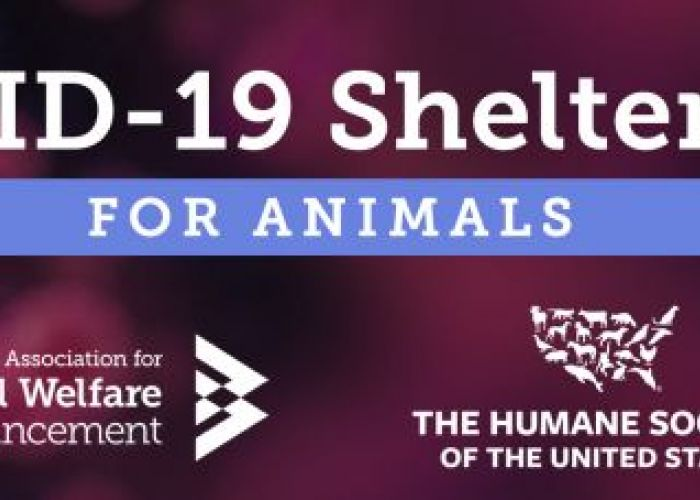 Covid-19 shelter kit for Animals