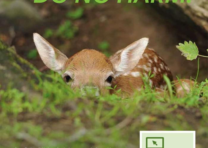 a baby deer in the grass