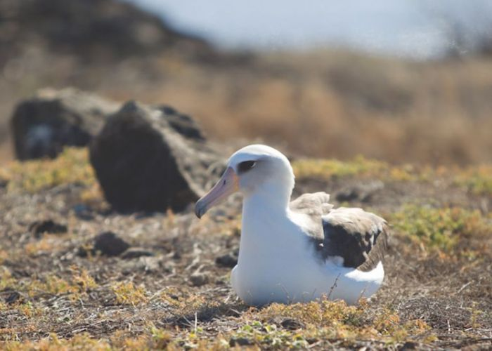 an albatross sitting on some moss