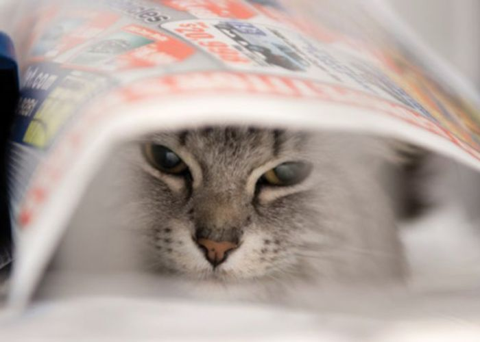a cat hiding under a piece of newspaper