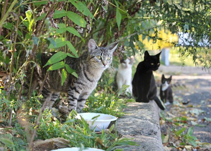 a group of community cats near the roadside