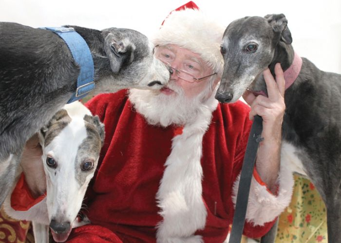 Santa poses with three greyhounds