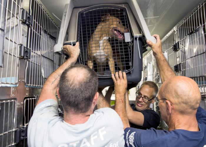 Three men help unload a dog in a crate from a vehicle
