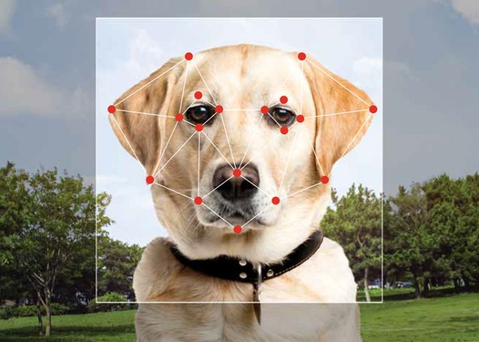 a dog with a layout of dogs over its face