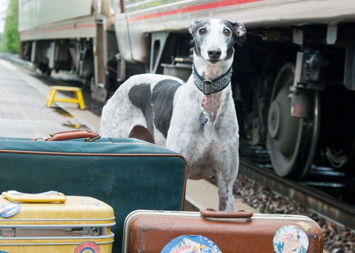 a greyhound standing with luggage alongside a train