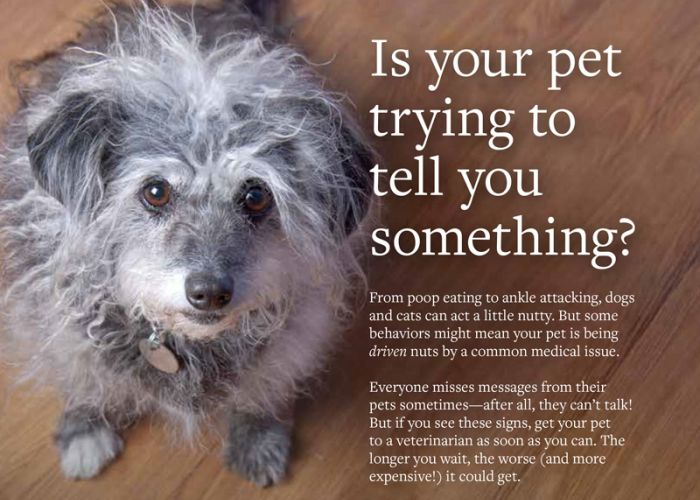 Is your pet trying to tell you something?
