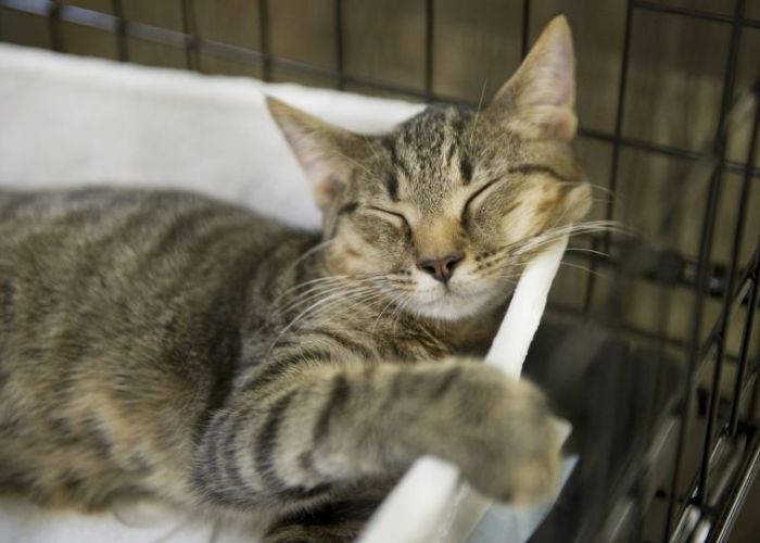 a cat sleeping in a bed inside a crate