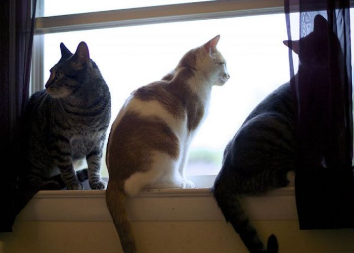 3 cats looking out a window