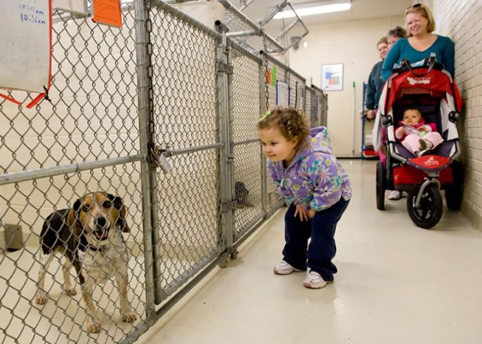 a little girl looks at a dog in a shelter while her mother looks on