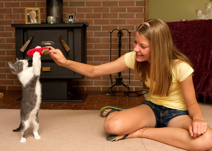 a girl holds out a toy for a kitten