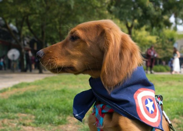 a dog in a superhero cape