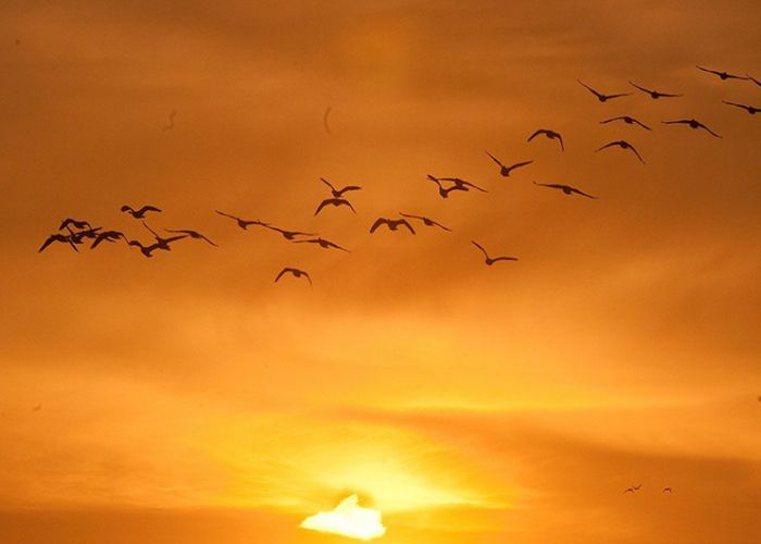 Birds in a sunset