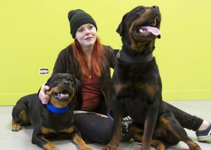 a woman sits with two rotweiler type dogs